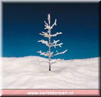 04482-9-inch-frosted-tree