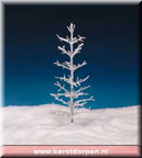 04481-12-inch-frosted-tree