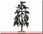 94008-snowy cypress tree large