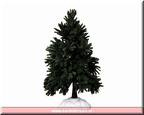 94998-evergreen fir tree large