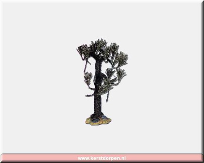 04189-9 inch.withered cypress tree